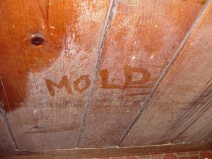 toxic mold is bad m'kay