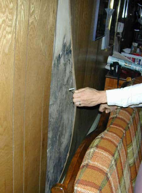 black mold behind wood panelling