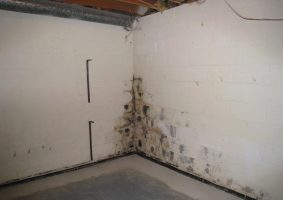 basement wall covered in mold