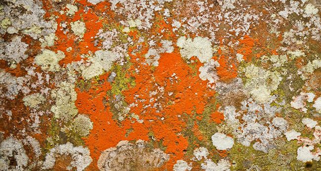 wall covered in Orange mold