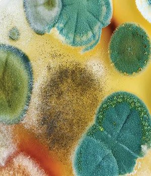 What Are The Different Colors Of Mold