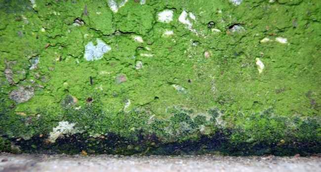 wall covered in green mold